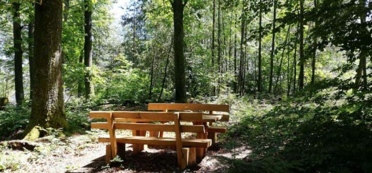 Zum Schutz der natürlichen Nacht im Pfälzerwald