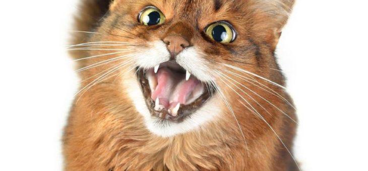 Gesundheitsrisiko im Katzenmaul
