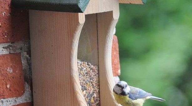 NABU-Naturtipp: Vogelfüttern – darauf muss man achten