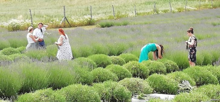 Neuer Partner der Regionalmarke UCKERMARK: Lavendel Grimme