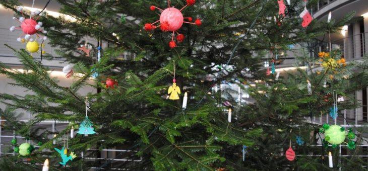Weihnachtsbaum aus dem Naturpark Dahme-Heideseen schmückt den Deutschen Bundestag