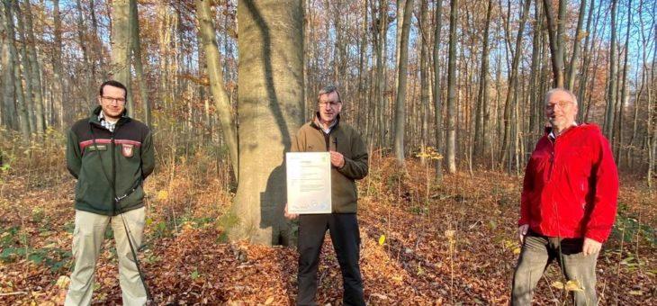 Wälder in Hessen werden nachhaltig bewirtschaftet