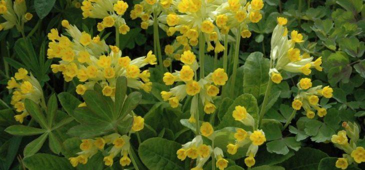 Garten: Kaltkeimer brauchen Kälteschock