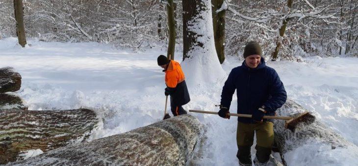 Winterdienst auf dem Wertholzplatz: Von Schnee und Eis befreit sind Eiche und Esche