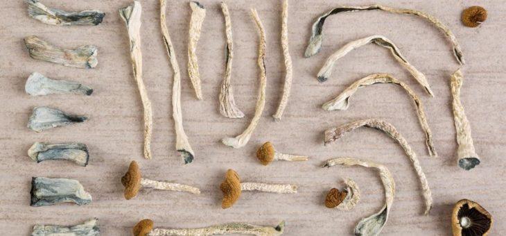 Pure Extracts legt Basis für den Eintritt in den Sektor der Psychedelika