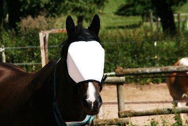 Augenschutz für Tiere