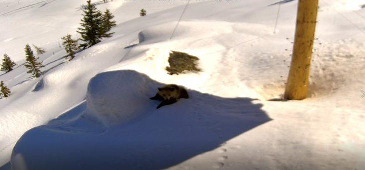 Frühlingserwachen im Arosa Bärenland