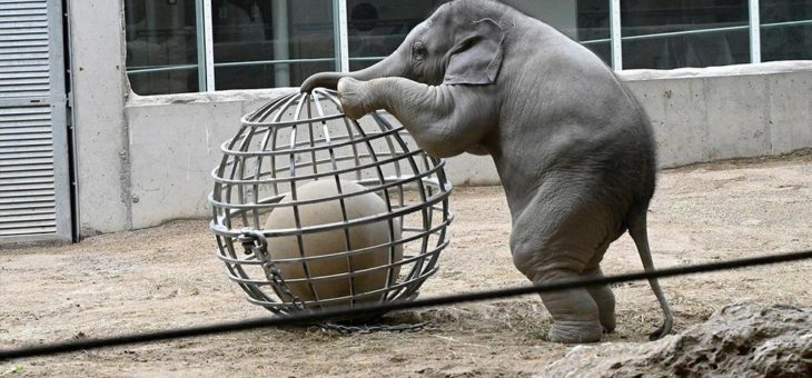 Hellabrunner Elefanten im Einsatz für die Feuerwehr