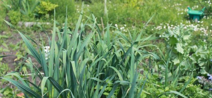 Teilnahme am Garten-Wettbewerb bis 30. April möglich